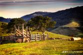 cattle-ramp-1-1200px.jpg
