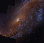 Click image for larger version  Name:N2442_(HST Legacy Archive data)(Processed by Rob Gendler_robgendlerastropics.com)_(2).jpg Views:10 Size:150.1 KB ID:139025