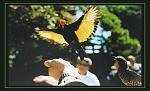 Click image for larger version  Name:Regent-Bower.jpg Views:36 Size:114.2 KB ID:18864